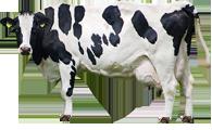 反刍动物用饲料添加剂
