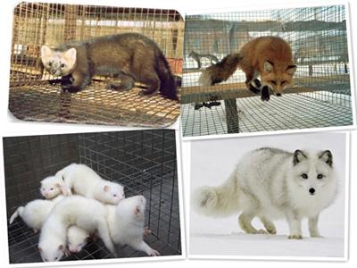 毛皮动物的十二个月