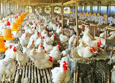 鸡场解决方案