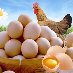 肉鸡,鸡蛋