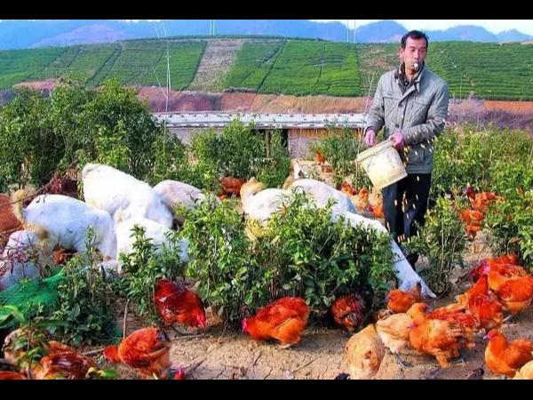 国家扶持家庭农场!家庭农场或迎来创业高潮!