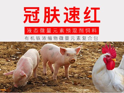 冠肤速红 液态禽微量元素预混合饲料