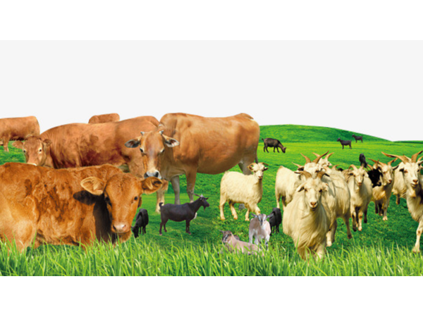 牛、羊饲料添加剂有哪些?