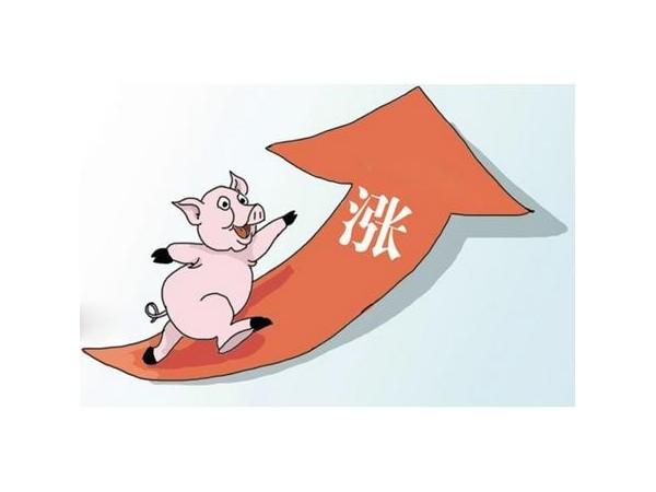 七大原因告诉你后期猪肉价格怎么走?