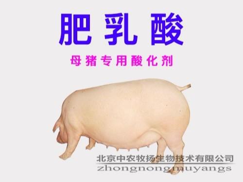 肥乳酸 母猪专用酸化剂