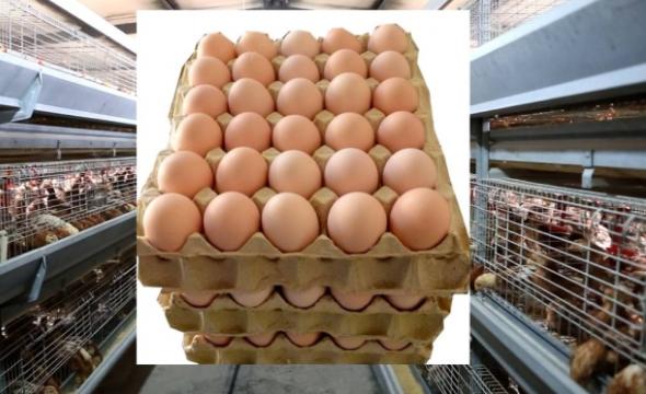 【收藏版】蛋鸡保健方案!配详细的饲料添加剂应用方案!