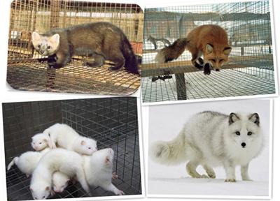 经济动物解决方案