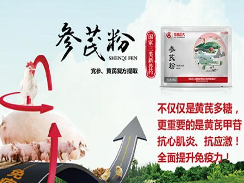 放养优质土鸡如何做到适期上市,跟着中农牧扬一起来看看吧