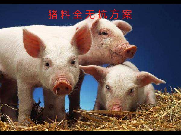 【干货】猪料全无抗方案