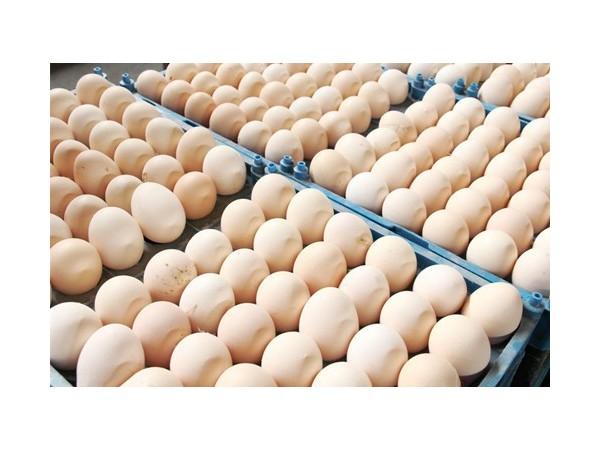 蛋壳变薄易碎怎么办?