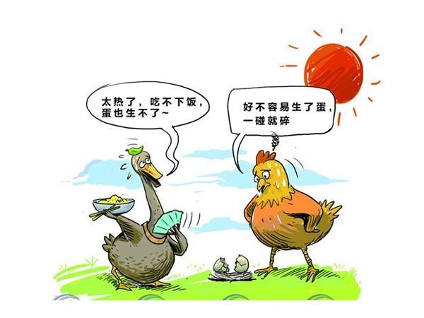 鸡热应激的危害和防治!