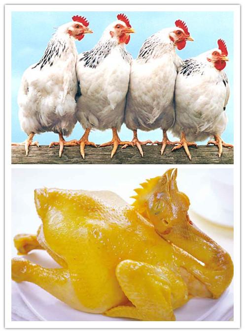 【收藏版】肉鸡高效着色的技术方案