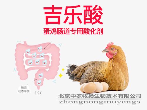 吉乐酸 蛋鸡肠道专用酸化剂
