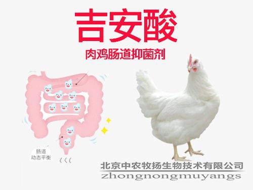吉安酸 肉鸡肠道专用酸化剂