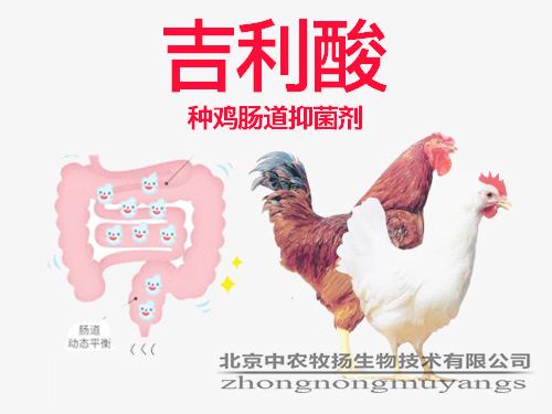 吉利酸 种鸡肠道抑菌剂