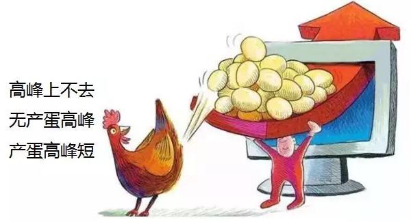 产蛋高峰上不去
