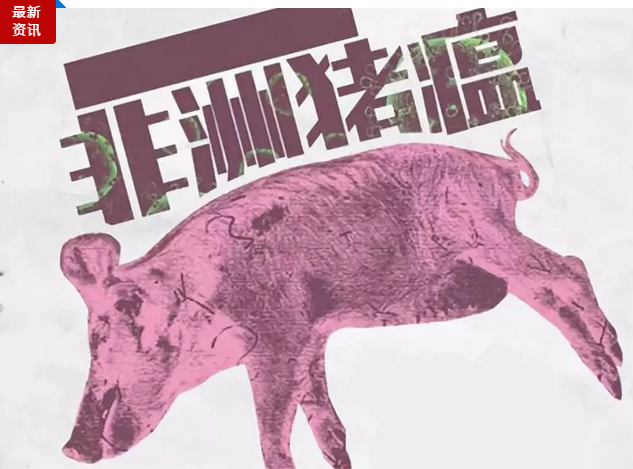 猪场怎样避免猪瘟?消毒10大误区必须掌握!