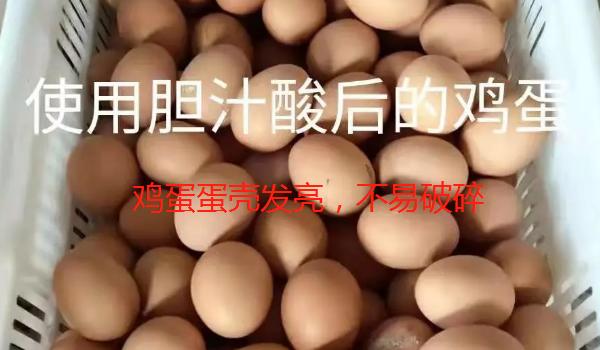 胆汁酸使用后的鸡蛋