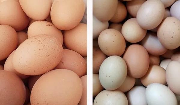 不健康的蛋